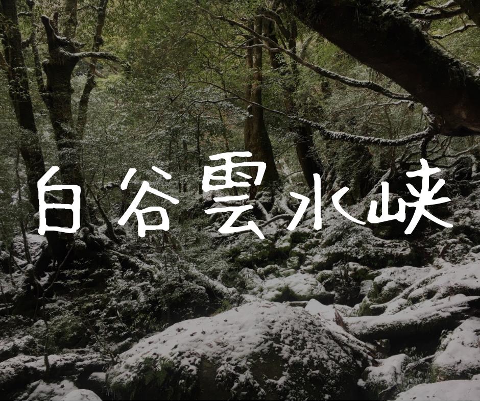 【屋久島|白谷雲水峡】ジブリファンが『もののけ姫の森』に突撃!太鼓岩往復コースの感想【冬編】