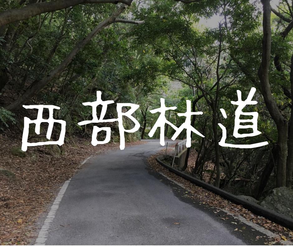 【屋久島|西部林道】腕試し?めちゃくちゃ狭い世界遺産の道を攻める!