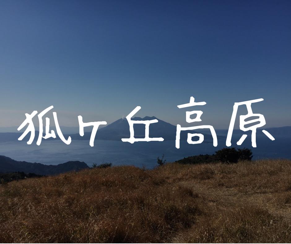 【狐ヶ丘高原】金色のススキに囲まれて見る桜島と錦江湾の景色は一級品です