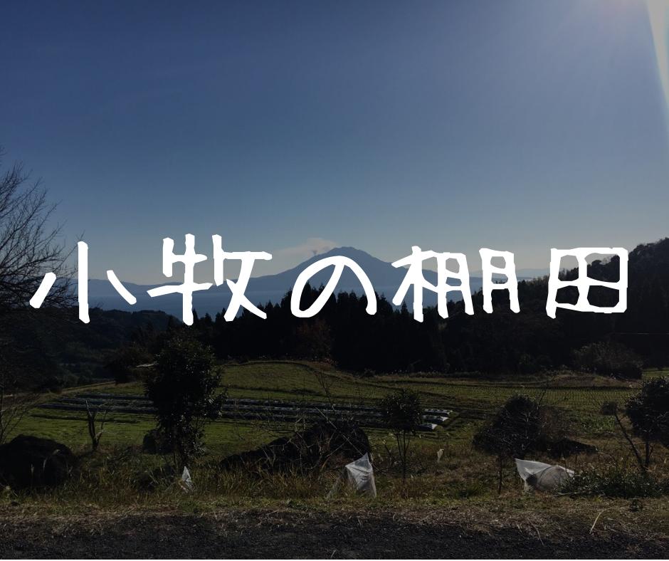 【小牧の棚田】ひっそりと在る。鹿児島の古き良きを感じる棚田