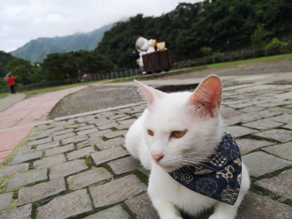 【台湾|猴硐(ホウトン)の猫村】十分と九份のあいだ。たくさんの猫に癒される。【行き方・感想】
